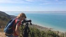 Une sortie à la découverte des oiseaux de la baie