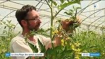 Agriculture biologique : les serres chauffées autorisées