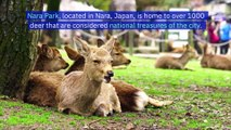Nine Deer in SacredJapanese Sanctuary DieAfter Eating Plastic Bags