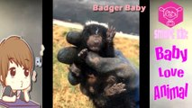 Animaux mignons de bébé Vidéos Compilation moment mignon des animaux - So Cute! #2