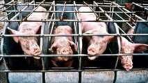 EATING FEAR - The Horrible Truth About Meat Production - Farm to Fridge  Documentary