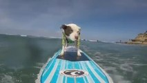 Dog Surfs Wave All by Herself