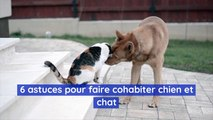 6 astuces pour faire cohabiter chien et chat