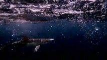 """أسماك القرش في البحر الأبيض المتوسط معرضة لخطر """"الاختفاء"""" منه"""