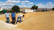 Kırıkkale'den günlük 800 ton buğday ve arpa sevkiyatı yapılıyor