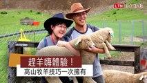 清境趕羊嗨體驗! 來當高海拔牧羊人