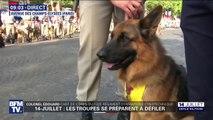 14-Juillet: 80 chiens du régiment cynotechnique vont défiler sur les Champs-Élysées