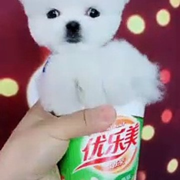 Animals Pets Funny & Cute Video p1
