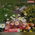 Le jardin du Lautaret, 120 ans de célébration de la nature