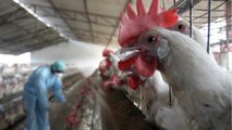 Studying Bird Dookie May Save The World From Global Flu Pandemics