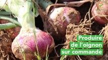 Burkina Faso : Produire de l'oignon sur commande