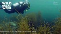 Les incroyables images d'une méduse géante