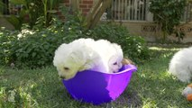 A Bowl Full Of Puppy- OMG- - Puppy Love