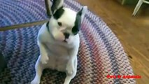 funny dogs dancing dogs viral dogs videos 2019