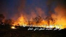 النيران تواصل التهام أجزاء من غابات الأمازون