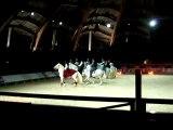 cheval passion avignon 2008