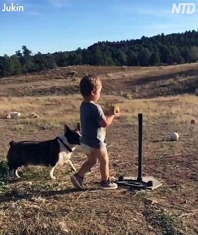 Corgy plays baseball with kid brother
