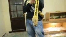 Dead python