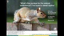 Squirrel 999 call