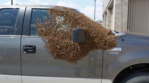 Bees Pick Pickup to Take a Break