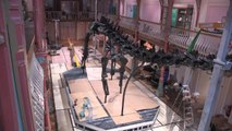 Timelapse: Dippy the Diplodocus installed in Dorchester
