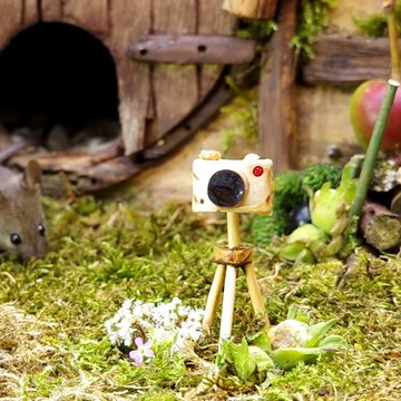 George the Mouse in a Log pile House - say cheese