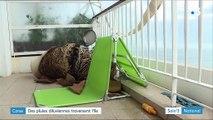 Corse : importants dégâts après de violents orages