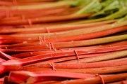 La rhubarbe, fruit controversé mais riche en calcium