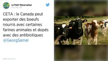 Conditions d'élevage, concurrence déloyale: le Ceta fait trembler les éleveurs bovins français