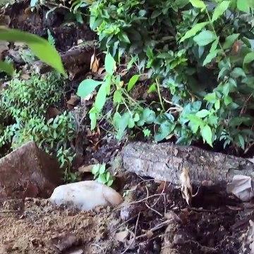 2 year jungle vivarium documentary update - Termites, ants and spiders (Nature Documentary)