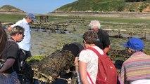 A la découverte des huîtres de Paimpol