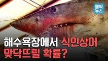 [엠빅뉴스] 해수욕장 앞바다까지 상어가? 커지는 죠스 공포