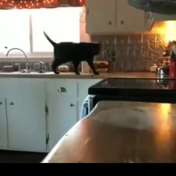 Funny cat video moments will make you smile#7