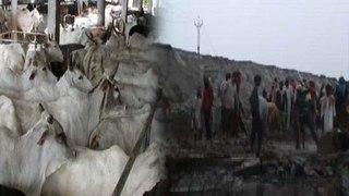 Punjab: Bathinda में Cow Shelter Collapses, Heavy Rainfall से हुआ हादसा | वनइंडिया हिंदी