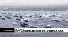 Un super-banc de dauphins aperçu au large de la Californie