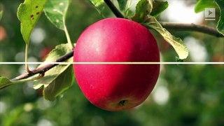 Estudio: las mujeres con cuerpos en forma de pera son más saludables que las mujeres con cuerpos en forma de manzana