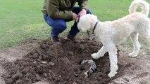 Chatsworth dog finds dinosaur bone