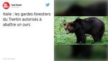 Italie : La chasse à l'ours M49 secoue le Trentin