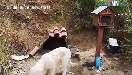 Cão recusa-se a sair do sítio onde o dono morreu... há 18 meses!