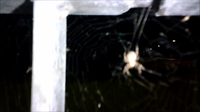 MCH 131 SPIDERS.ARACHNOPHOBIA. FACE YOUR FEAR.