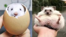 Cute Baby Animals Videos Compilation Cute Moment Of The Animals - Cutest Animals On Earth - WOA Animals