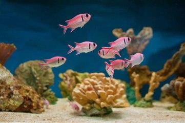 How to take care of your aquarium?