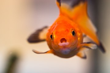 How to Feed your Fishes?
