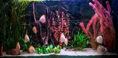 The Different Types of Aquarium