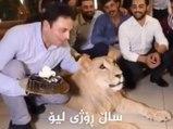 Idiot : un homme écrase un gâteau d'anniversaire sur la gueule d'un lion !