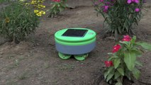 Tertill robot weed trimmer actually works