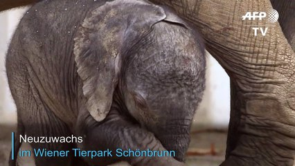 Neuzuwachs im Tierpark Schönbrunn in Wien