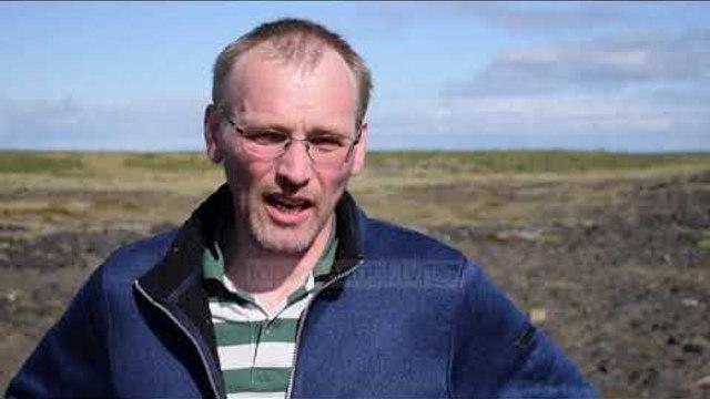 Islanda tenton të rikthejë pyjet që shkatërruan vikingët - Top Channel - News - Lajme