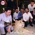 Cet idiot écrase un gâteau d'anniversaire sur la gueule d'un lion !