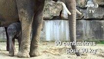 Un bébé éléphant est né au zoo de Schönbrunn à Vienne en Autriche